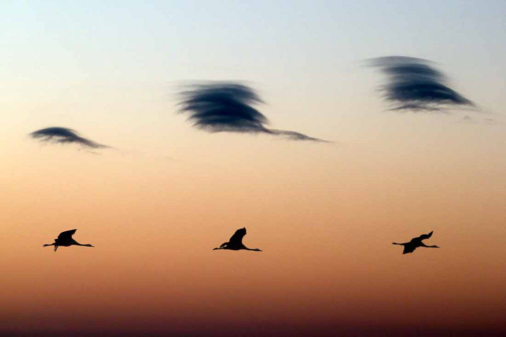 Superposition de 3 nuages et de 3 grues au soleil couchant
